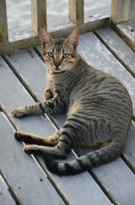 Spyke descancando na varanda